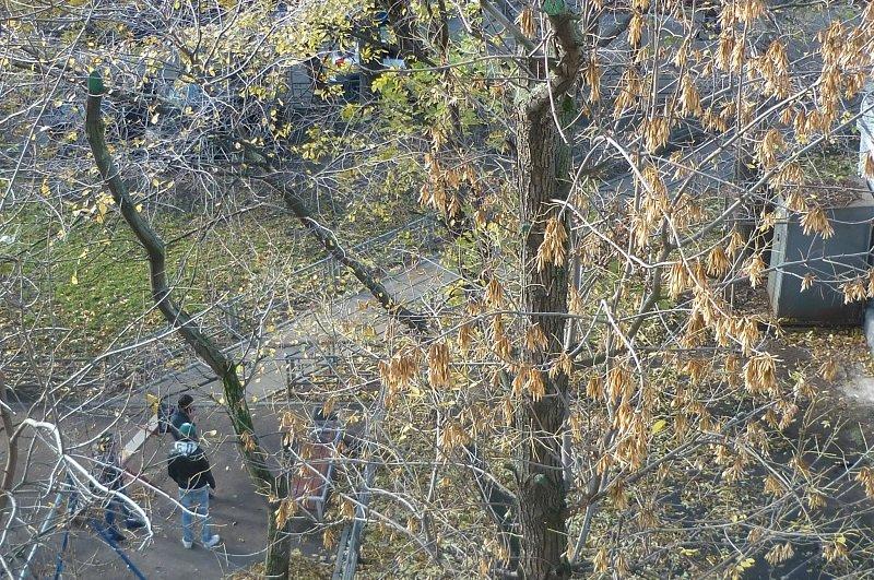 Листьев нет-открылся дворик под моим окном... - Татьяна Юрасова