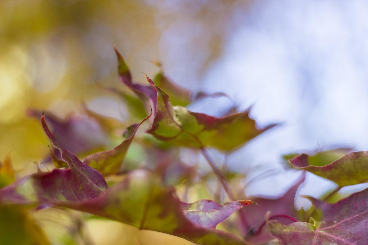Осенние листья - Дима Пискунов