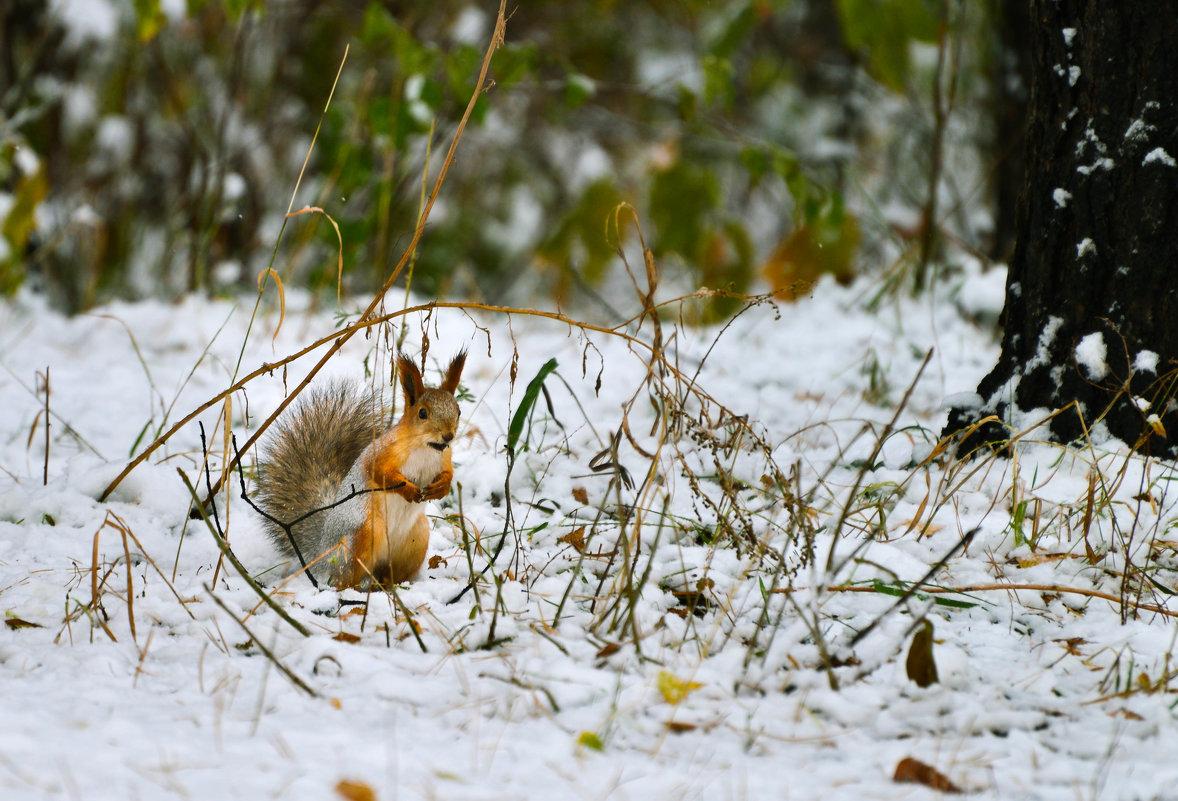 Нычку потеряла под снегом - cfysx