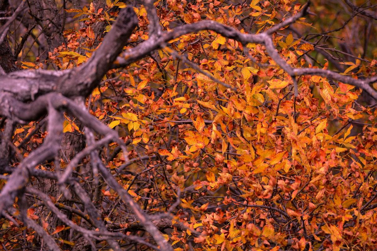 Осенние контрасты - Дмитрий