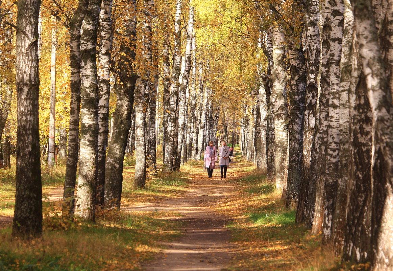 Прогулки в осени - Татьяна Ломтева