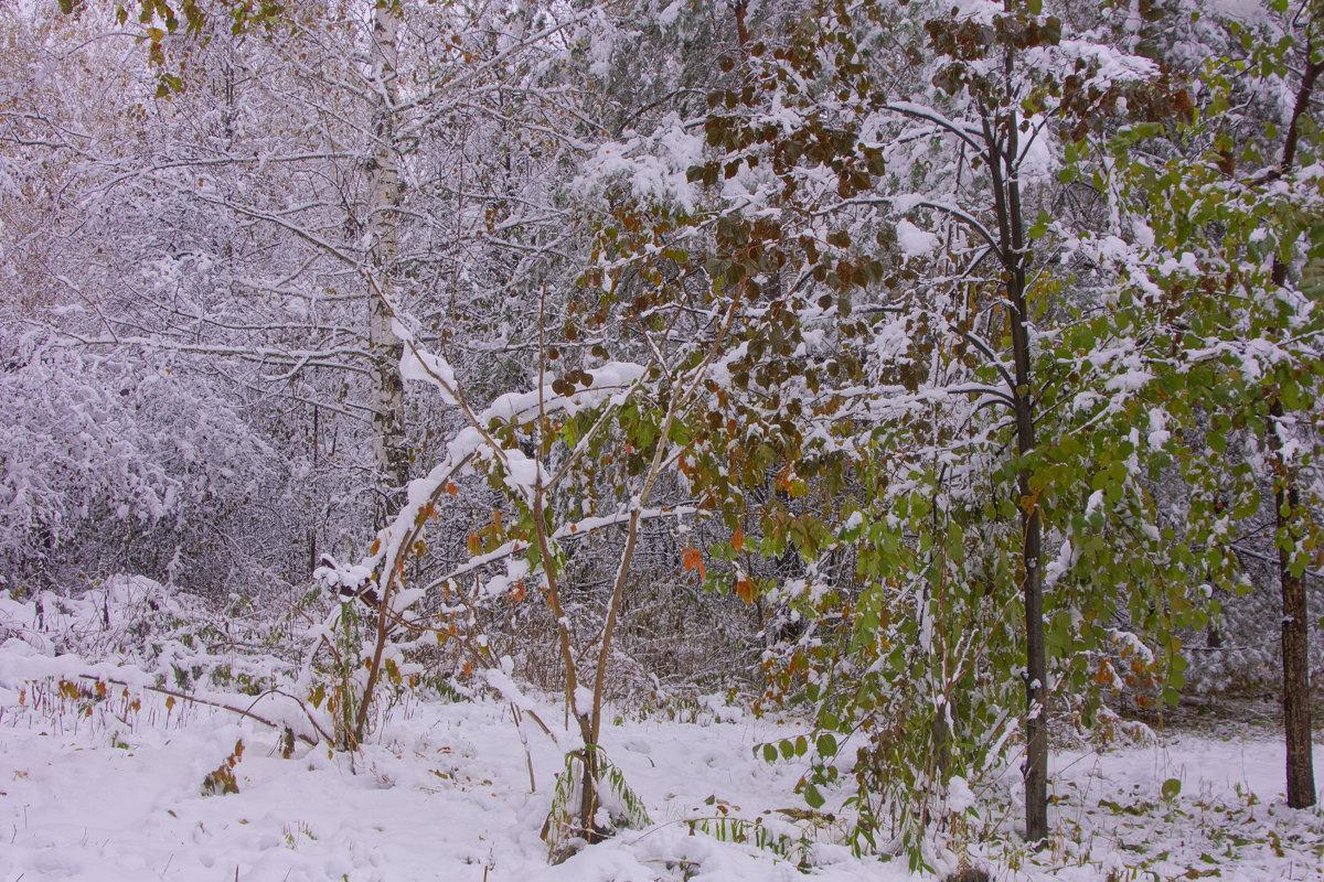 Первый снег---05 - Владимир Холодный