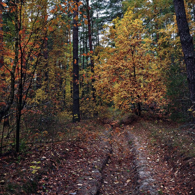 Дорога в осень... - Александр Бойко