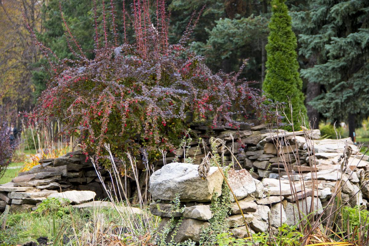 в саду - валерий