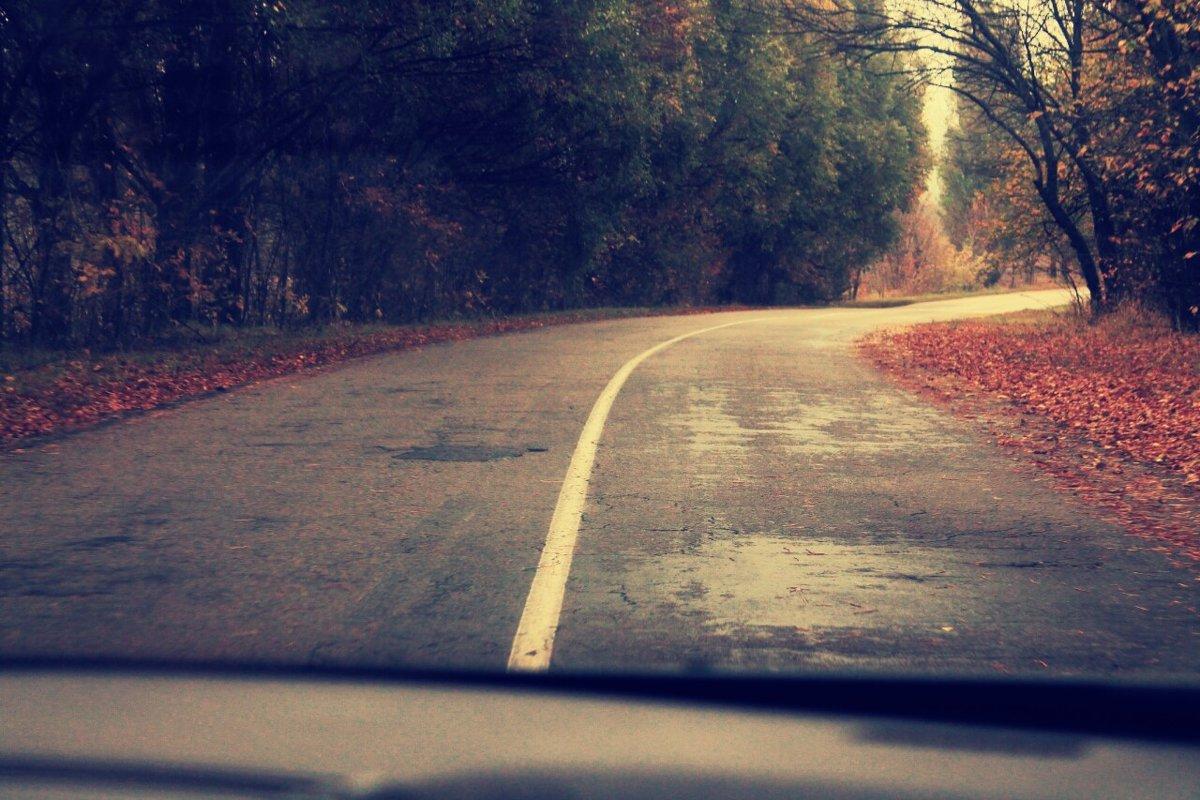 дорога по лесу - сергей мыряха
