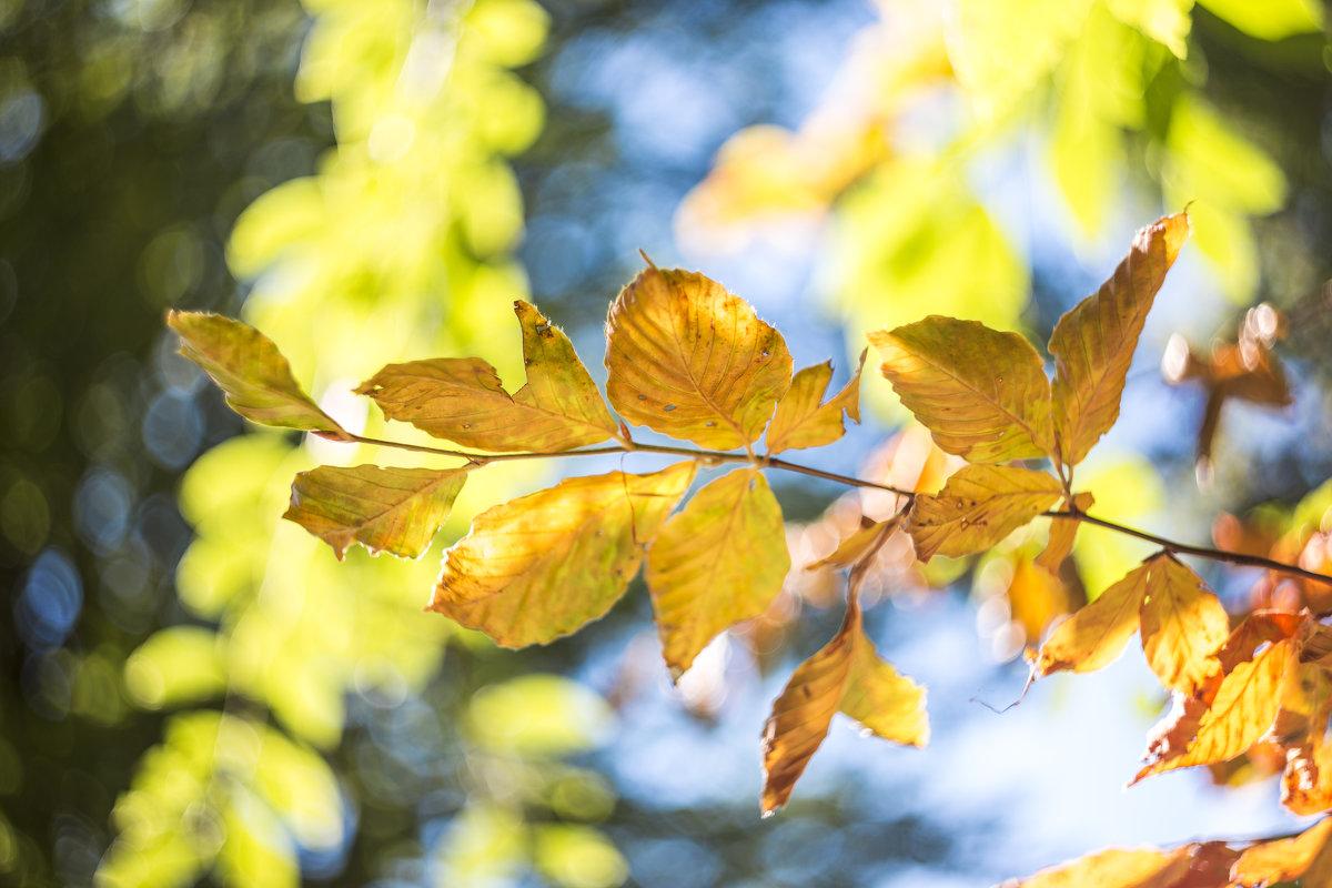 Осенний лист, Гелиос 44-2 - Дмитрий