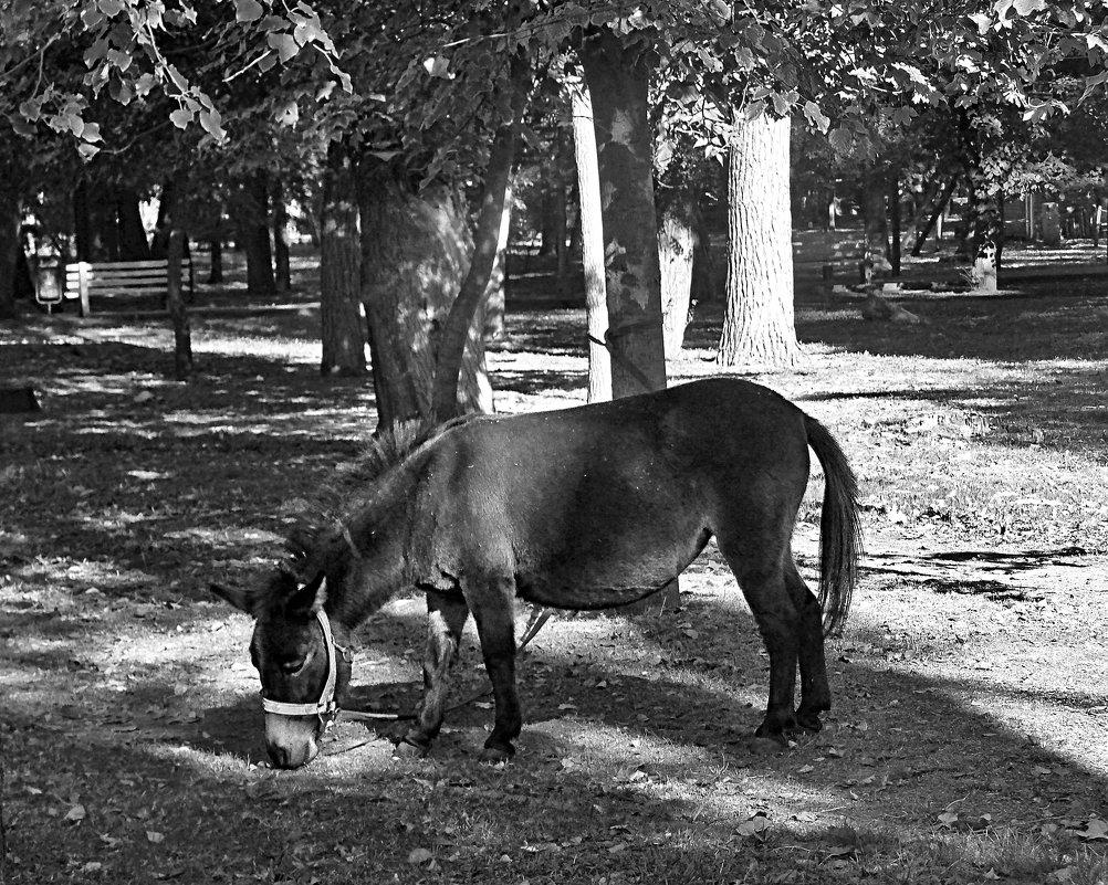 Разве, разве я не лошадь? - Наталья