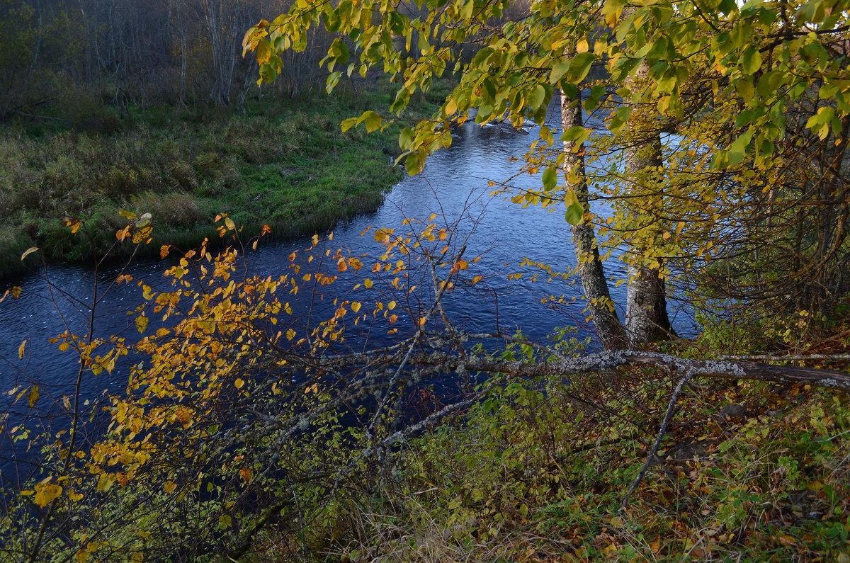 Осень - Наталья Левина