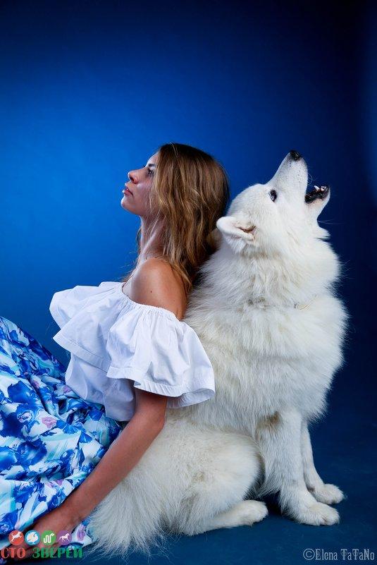 Белый волк - 100ЗВЕРЕЙ Агентство дрессированных животных