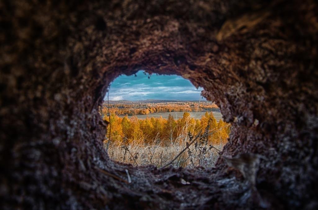 Хорошо, когда из твоей норы прекрасный вид на осенний лес! - Константин Филякин