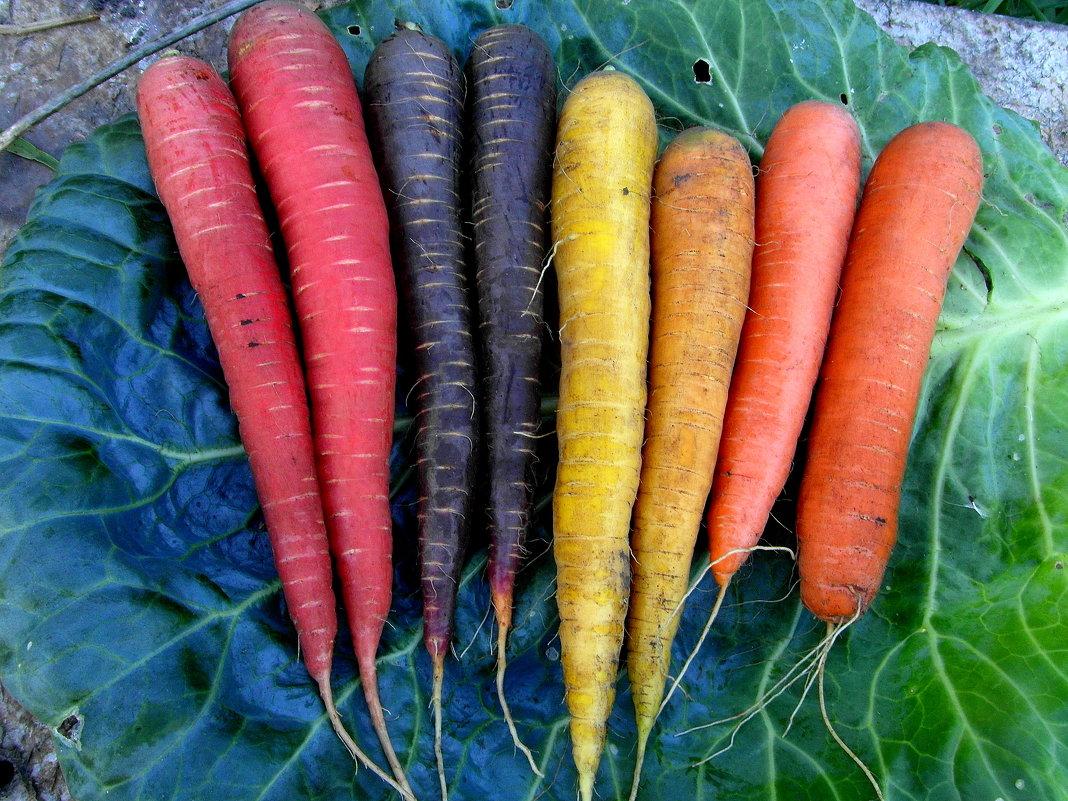 Радужная морковка. - nadyasilyuk Вознюк