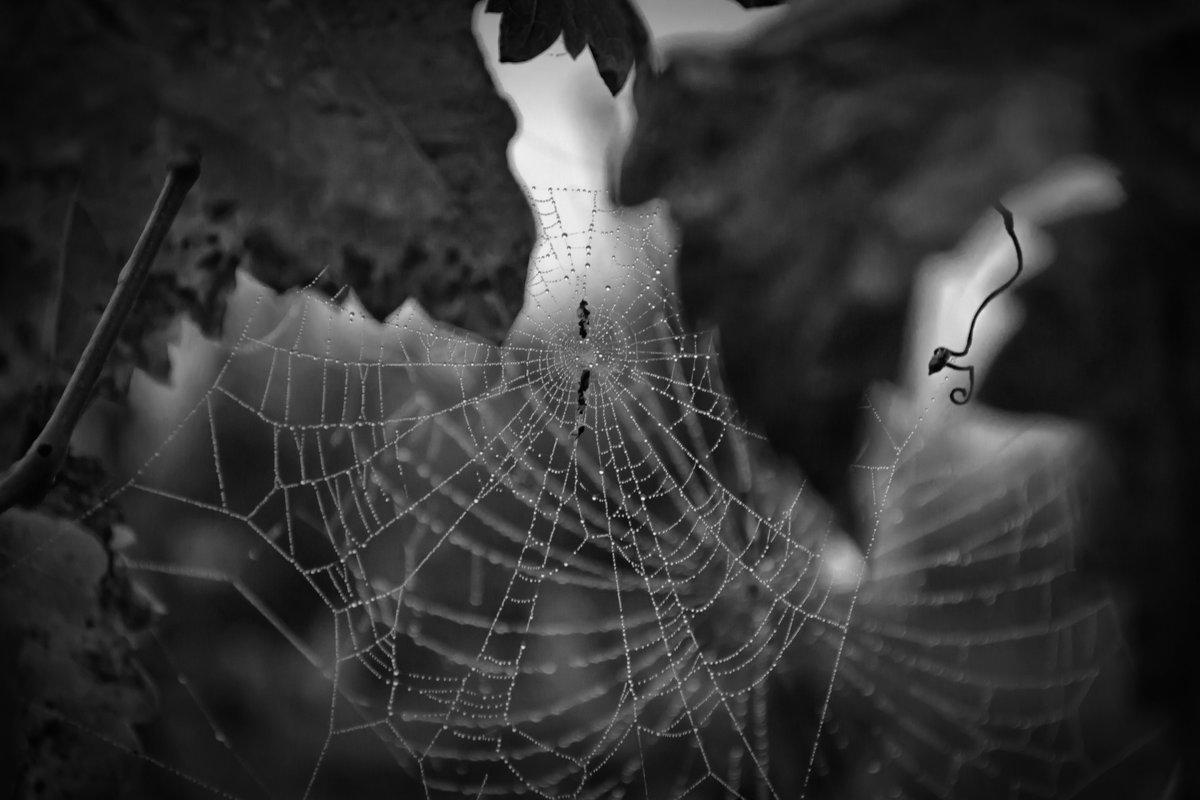 Утренний узор тумана и паука тоже - catonbox