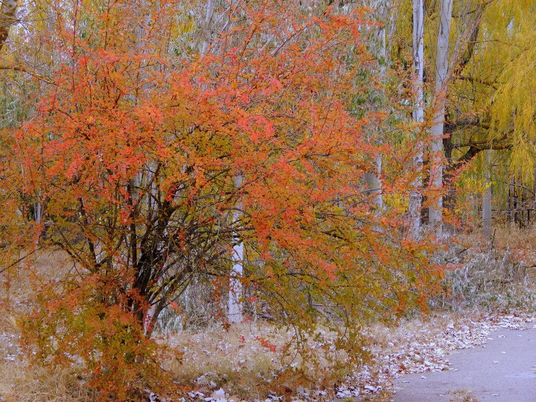 Кружевная осень - Рина Воржева