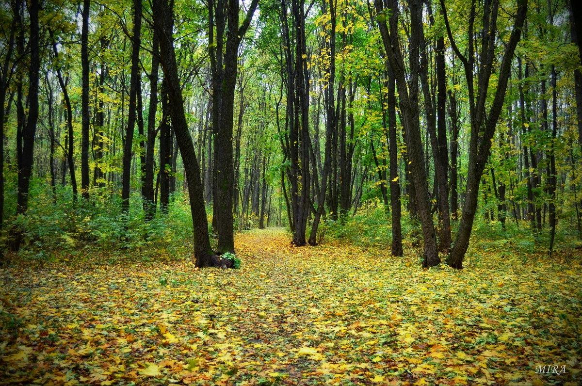 Красавица осень в лес заглянула... - *MIRA* **