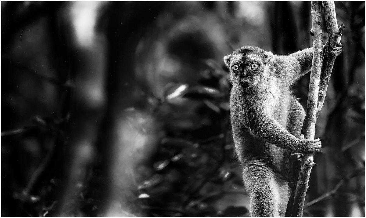 Опаля...белый человек тута...Лемурляндия,Мадагаскар! - Александр Вивчарик