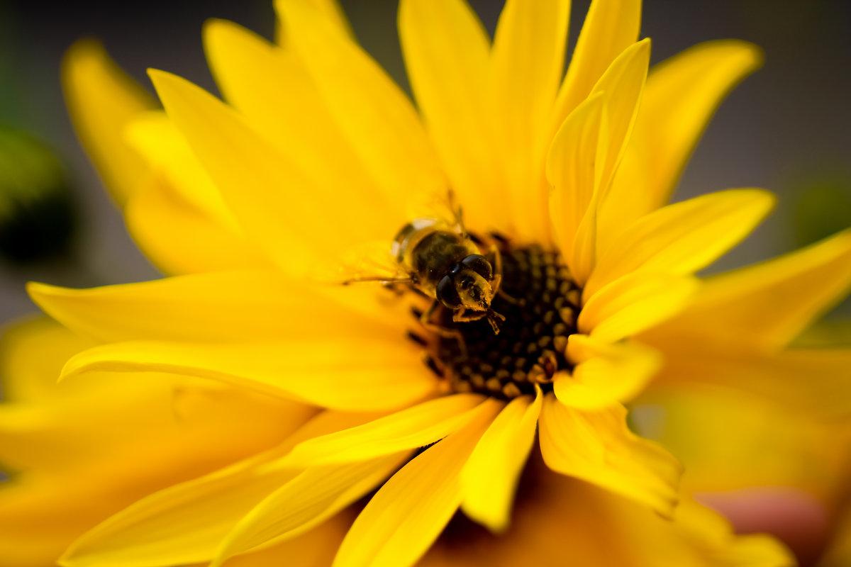 Пчелка - vcherkun