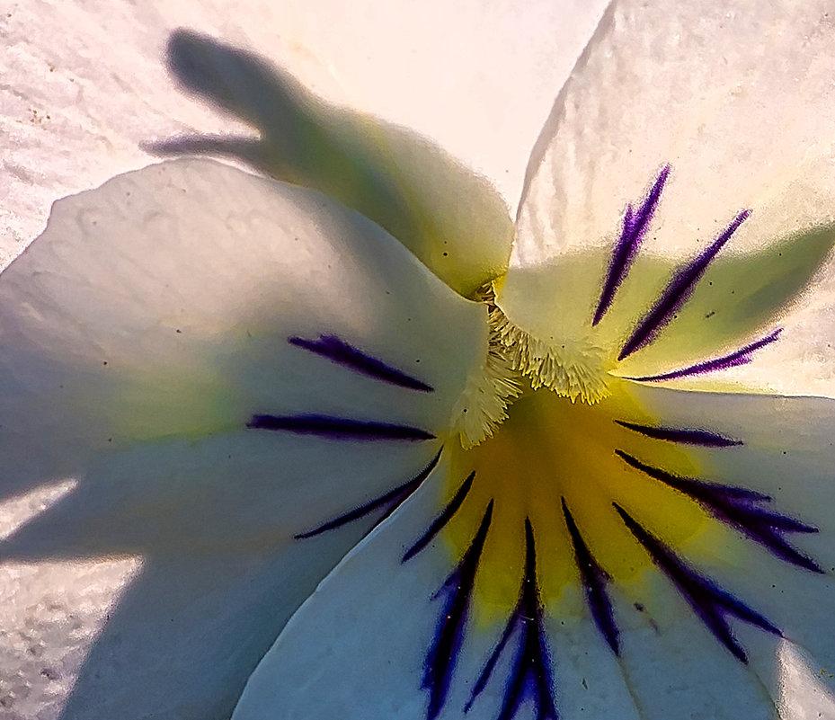Цветка без солнца не бывает... - Владимир Шамота