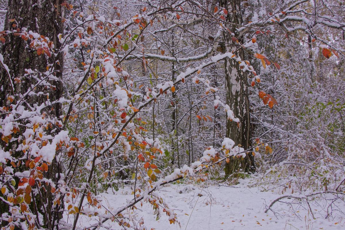 Первый снег---07 - Владимир Холодный