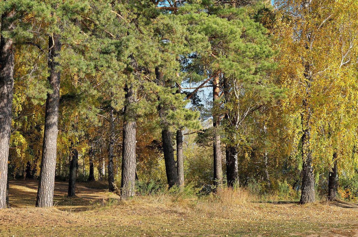 Осенний лес - Дмитрий Конев