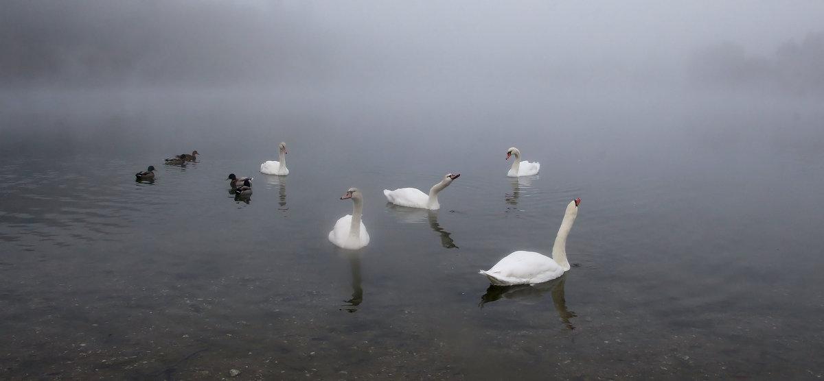 В туманном озере - Alexander