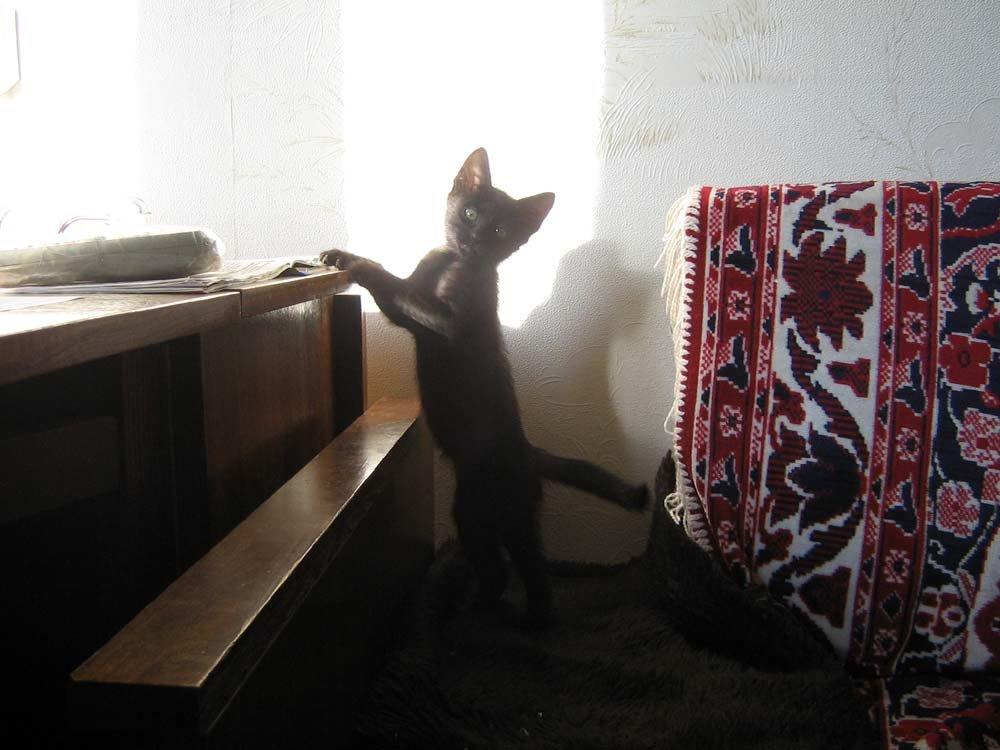 Кошачья грация - Татьяна