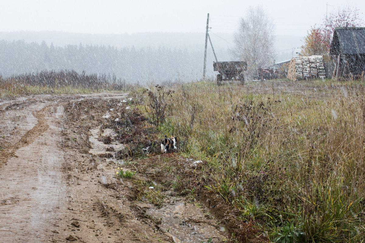 Первый снег... - Sergey Apinis