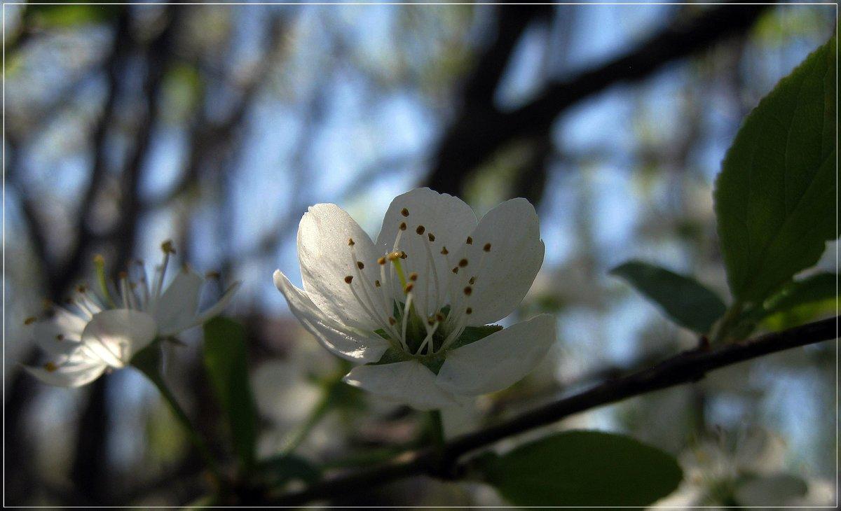 Воспоминание о будущей весне - muh5257