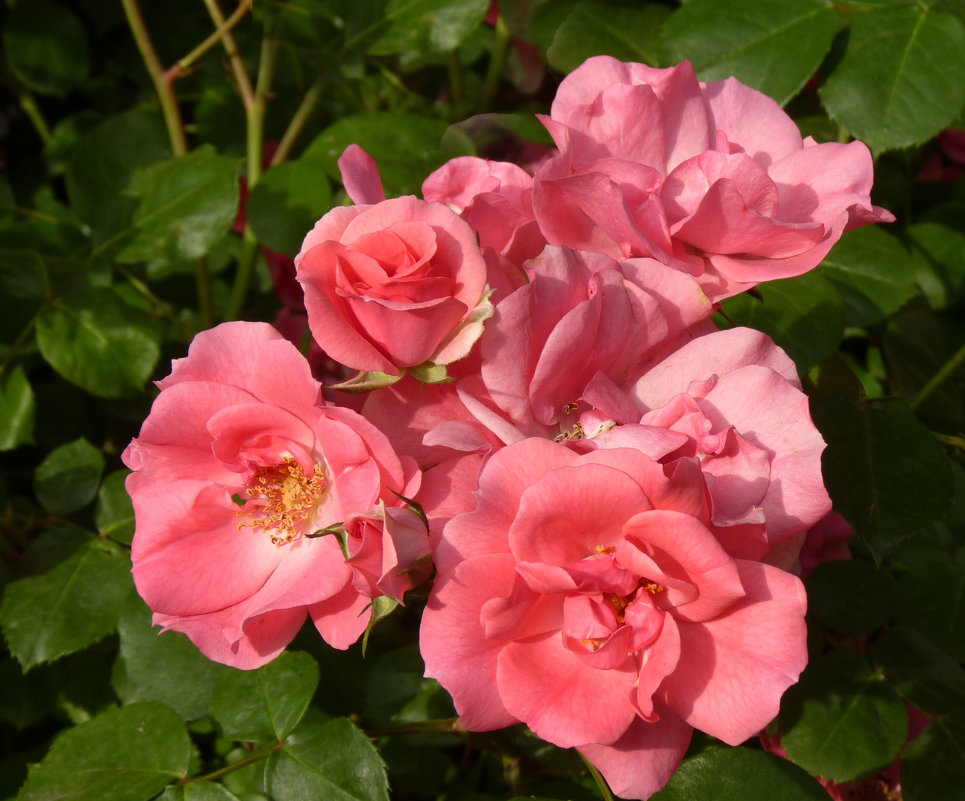 Розовый букет - Наталья Джикидзе (Берёзина)