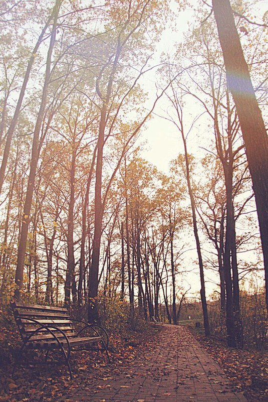 Осень - Alexandra G.