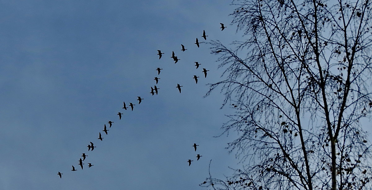 Улетают птицы... - Светлана