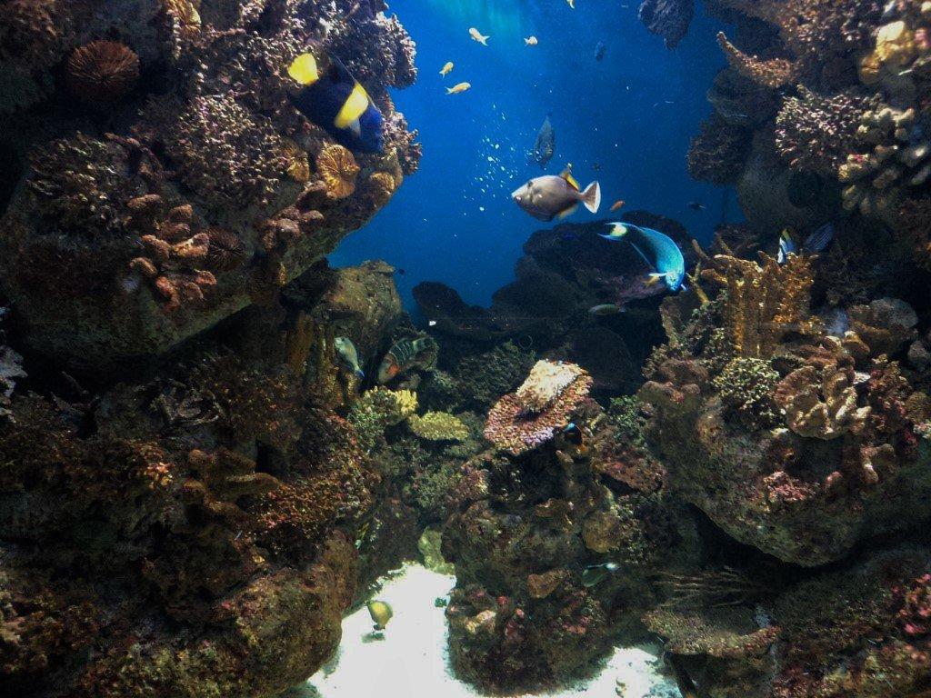 подводное царство - kuta75 оля оля
