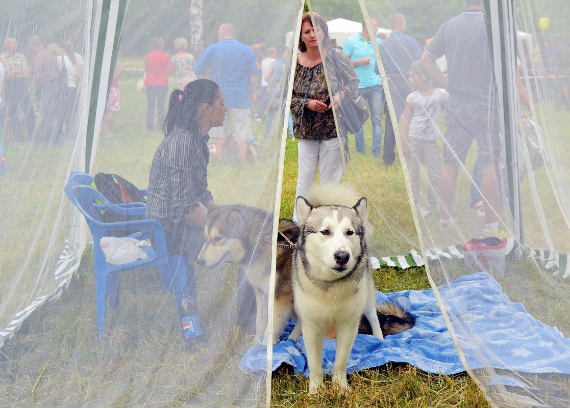 Девицы в светлице На Шахтинской выставке собак. - Владимир Болдырев