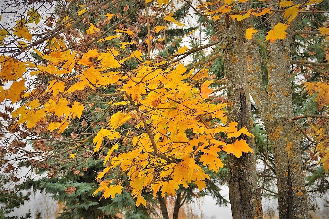 Осень на дворе - Валерий Талашов