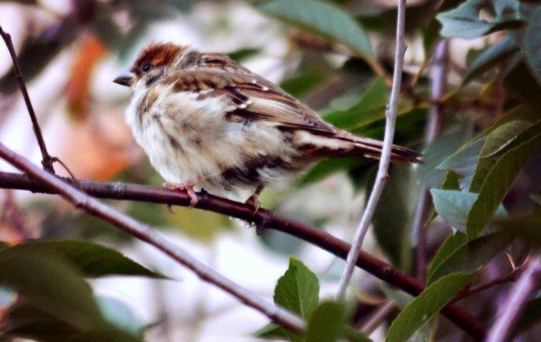 внимание, сейчас вылетит птичка - Кристина Громова