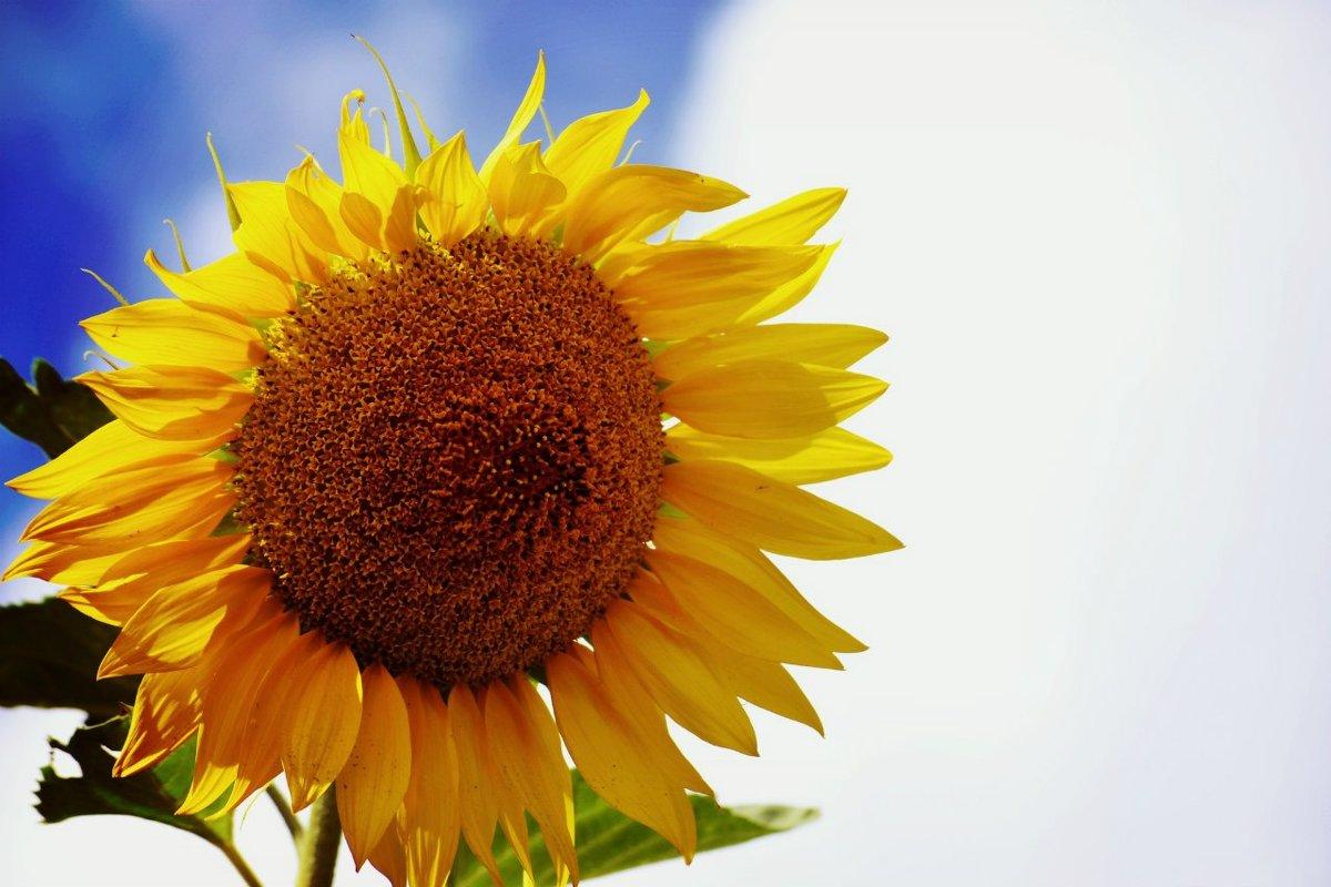 Солнечный цветок - Кристина Громова
