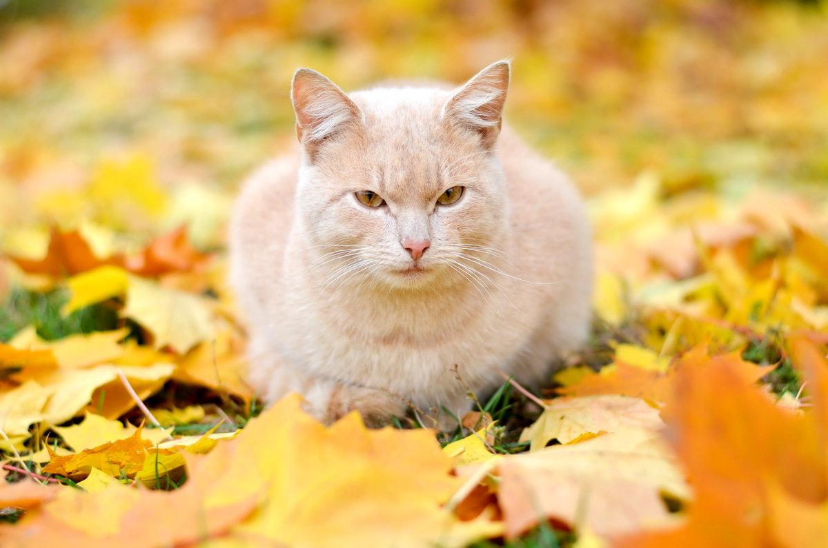 Кошка в осени - Марина Романова