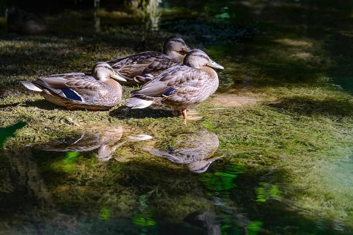 Хорватия, Сплит, национальный парк. - Сергей Бурлакин
