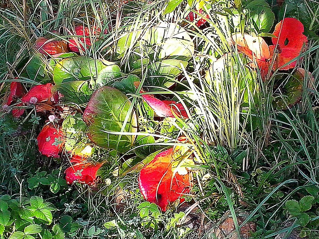 Прощальные краски  осени - Виталий Селиванов