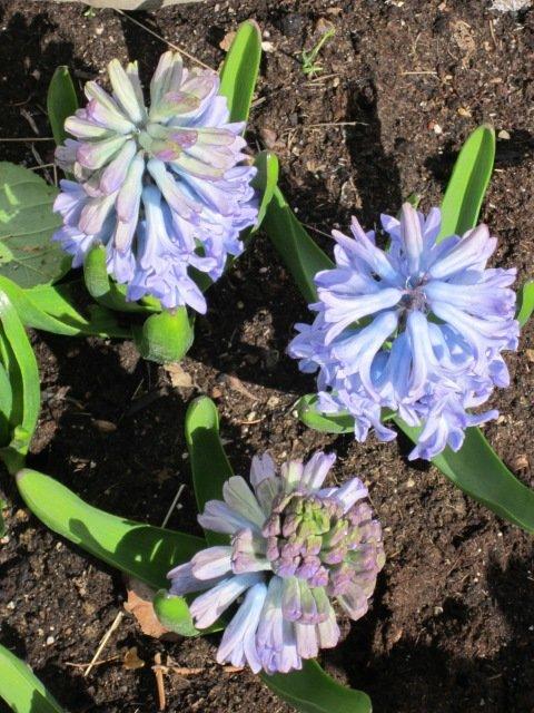 Голубые цветы - Дмитрий Никитин