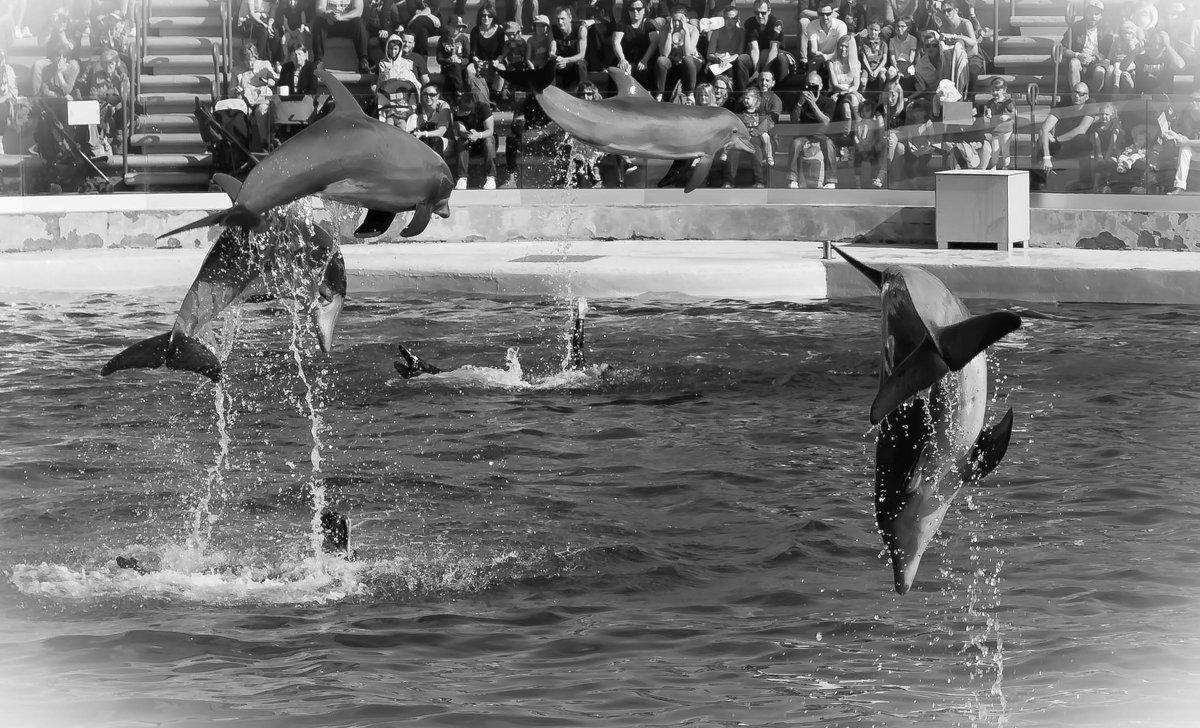 летающие дельфины - Елена Заичко