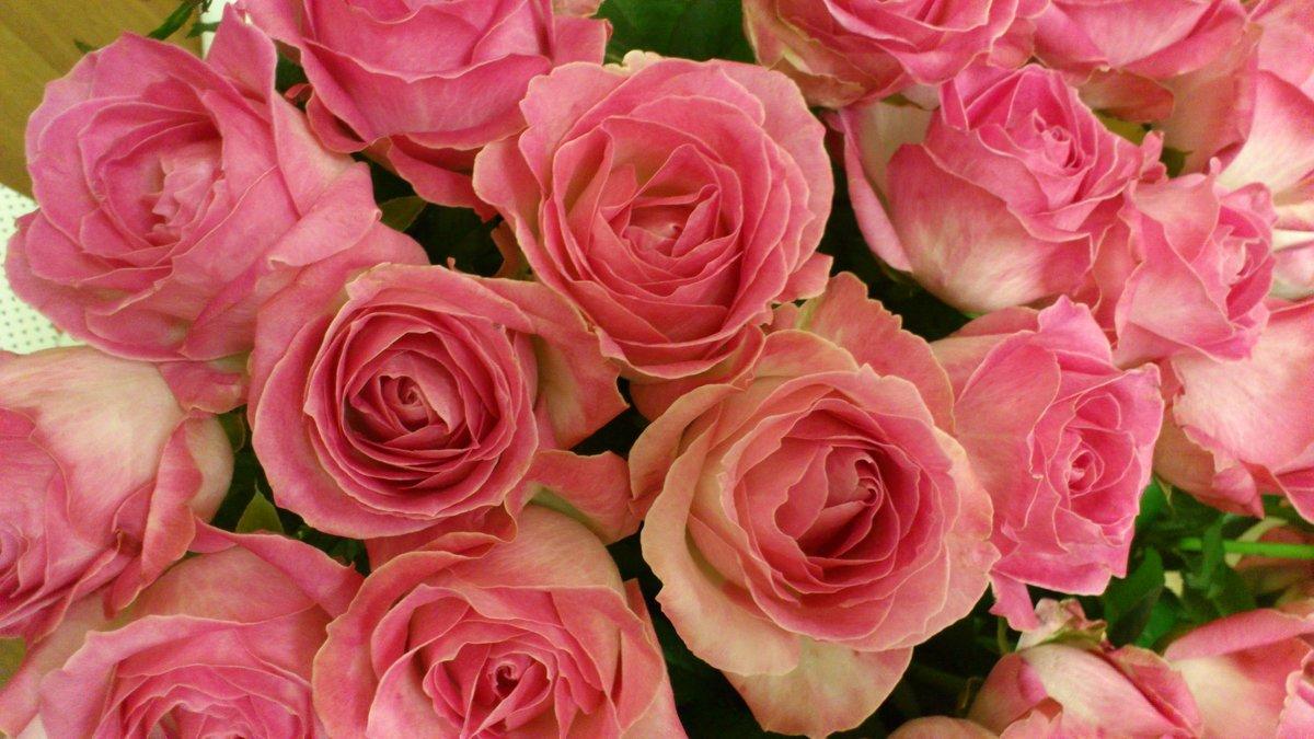 розы - Августа