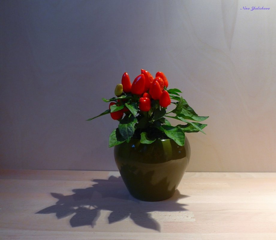 Жгучий перчик. Свет и тень - Nina Yudicheva