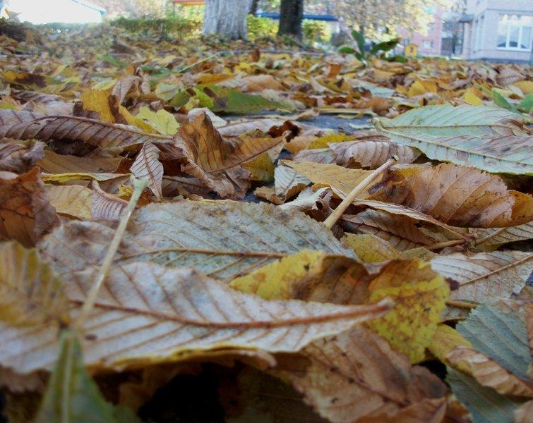 На ковре из жёлтых листьев...(с) - Галина Бобкина