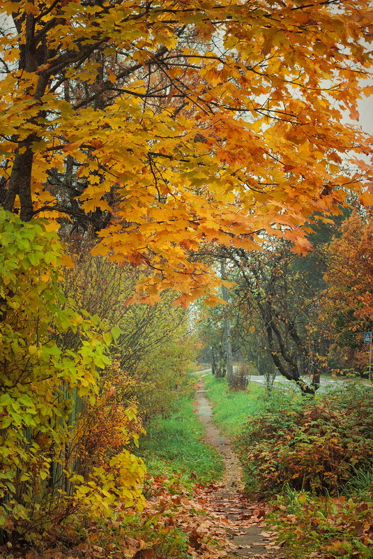 Цветущая осень - Наталья Ерёменко