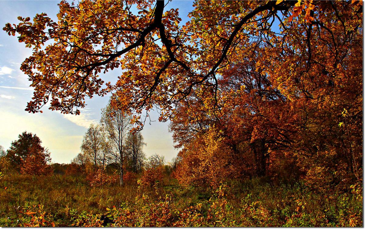 Золото октября - Вячеслав Минаев