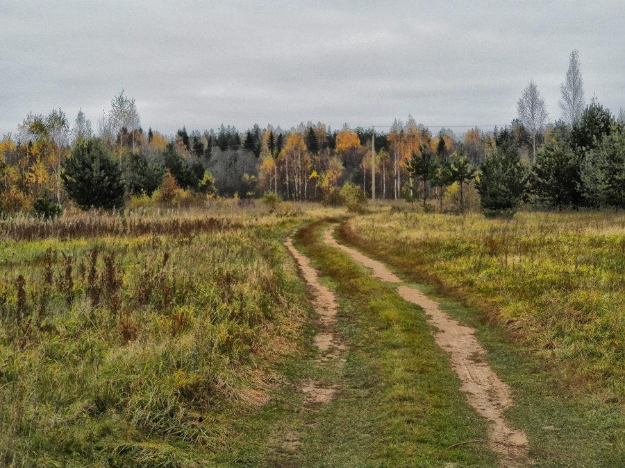 Дорога к лесу - Павел