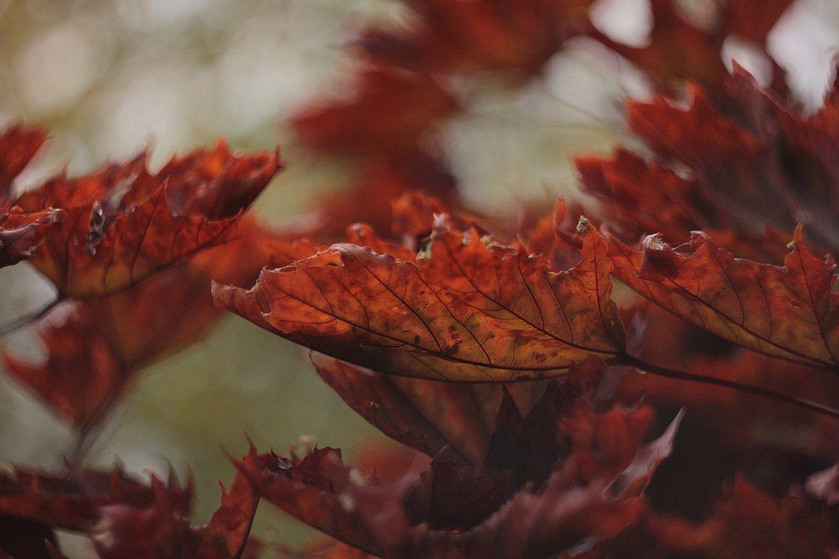 Осень - Ирина ***