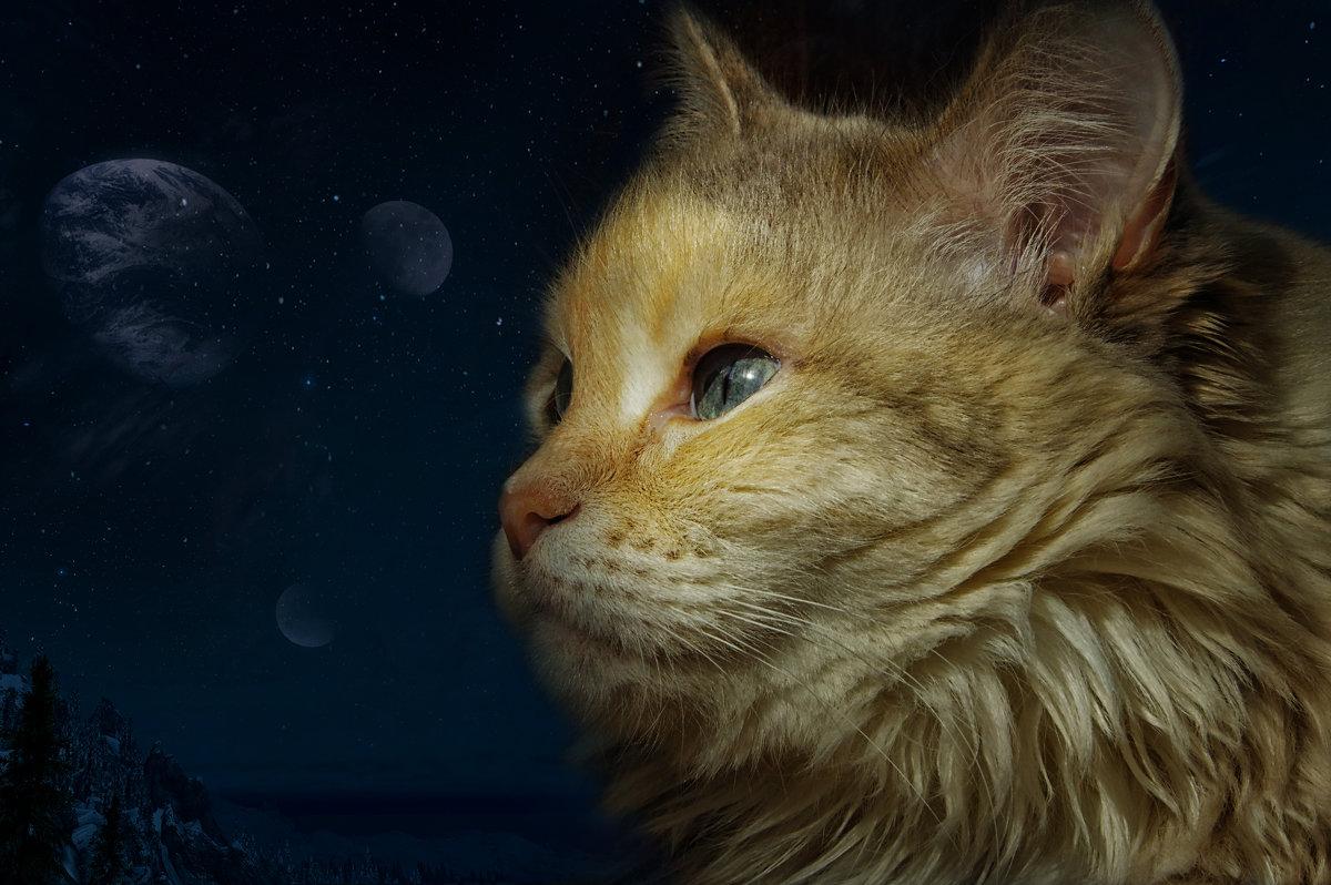 Мистика кошачьих глаз - Нина
