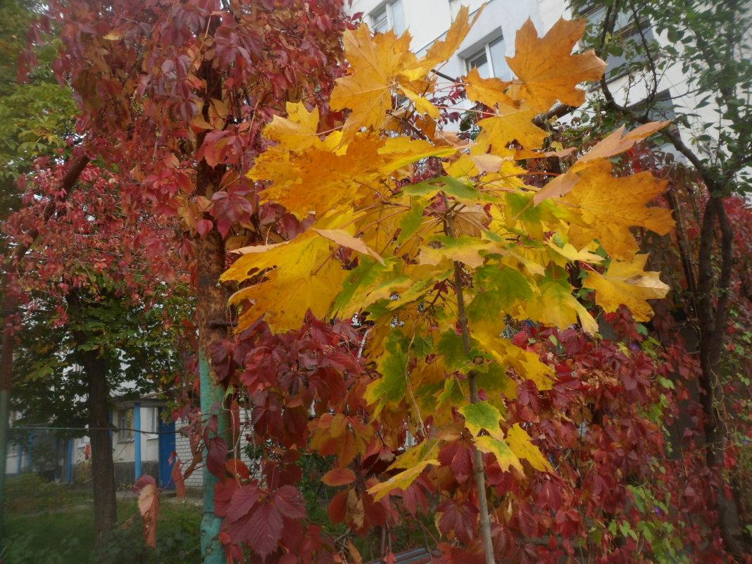 Осень - Галина Дашевская