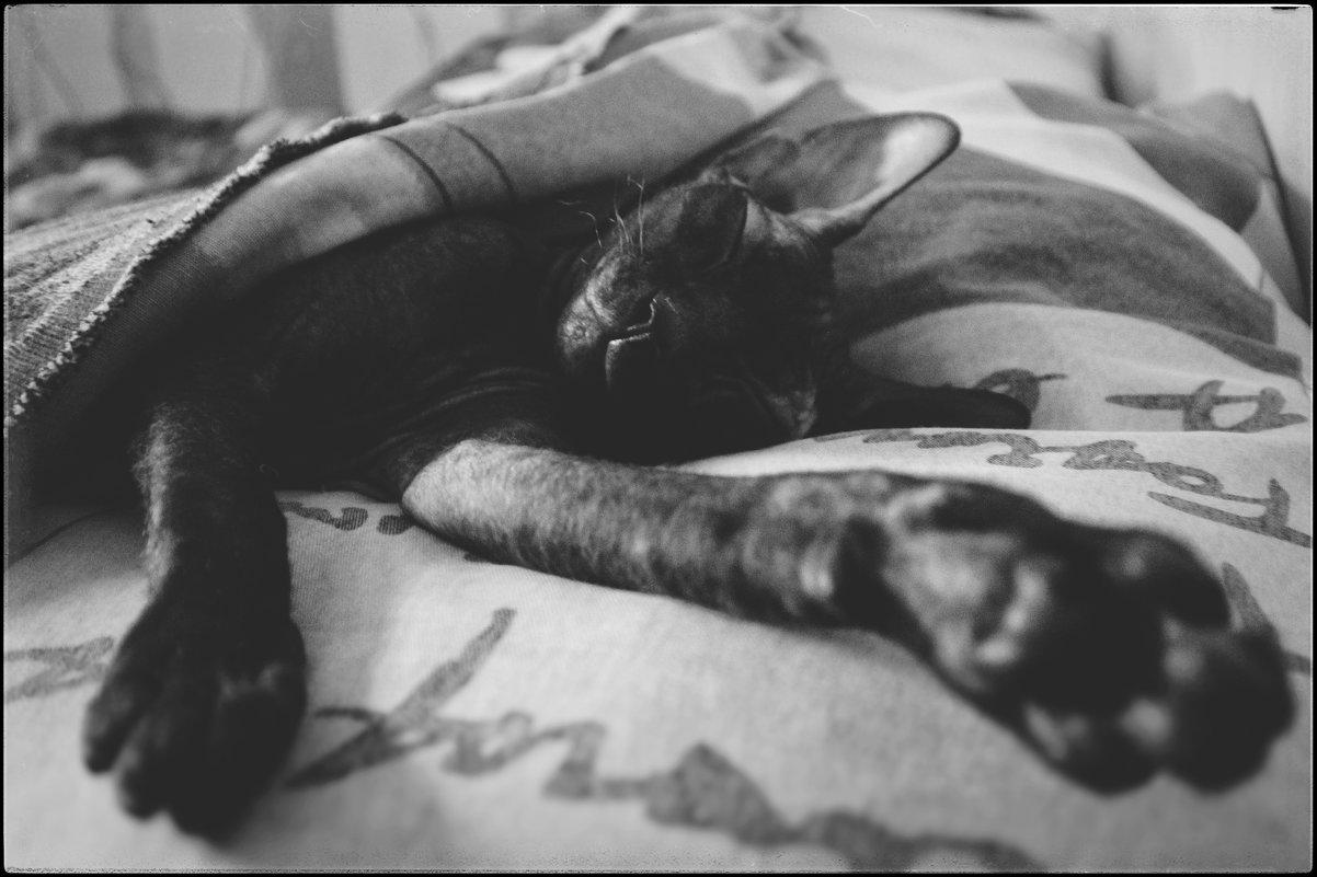 Кот, по кличке  Lex' s. - Марина Влади-на